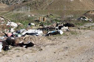 Σοκ από αυτοσχέδια χωματερή νεκρών ζώων