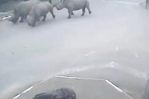 Οι ρινόκεροι το έσκασαν