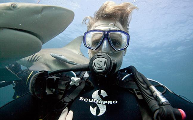 καρχαρίες selfies