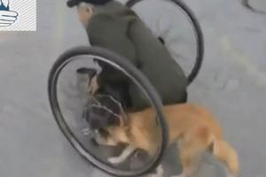 O σκύλος που βοηθά το ανάπηρο αφεντικό του