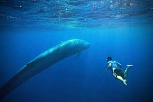 Κολυμπώντας με τους γίγαντες της θάλασσας