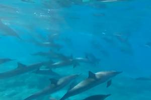Κολυμπώντας μαζί με δελφίνια