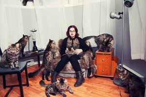 Η ζωή με τις γάτες