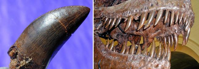ραντεβού δεινόσαυρος μαλακό ιστόμπλε ραντεβού