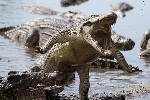 Επικές μάχες ζώων