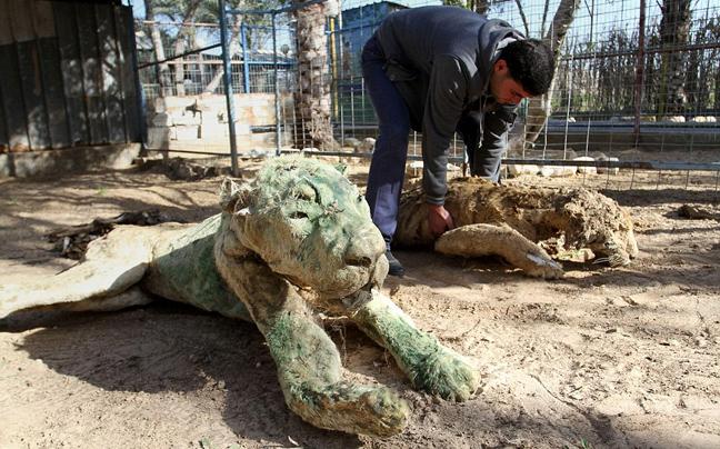 πόλεμος ζωολογικός κήπος Γάζα