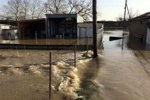 Με τεχνητή πλημμύρα επιχερούν να σώσουν τον Πόρο στον Έβρο