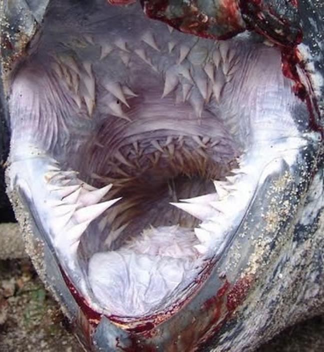 Πλάσματα του βυθού δόντια
