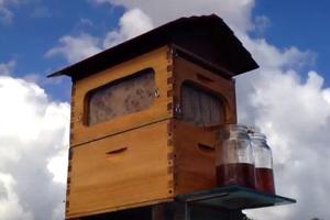 Η κυψέλη που βγάζει αυτόματα μέλι