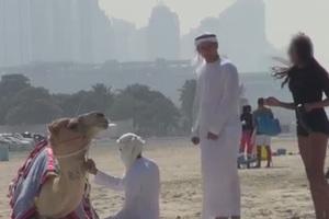 Στο Ντουμπάι το καμάκι γίνεται με... καμήλα