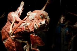 Άνοιξε μουσείο με ανθρώπινα νεκρά σώματα