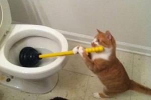 hilarious_animal_posts_on_tumblr_640_high_15_1424432214561