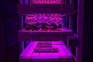 Φυτά «τρέφονται» με φως από λαμπτήρες LED