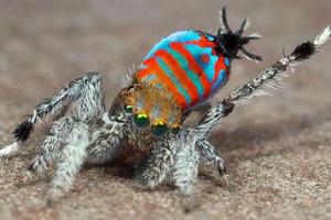 Ο νέος τύπος αράχνης, που καταπολεμά την… αραχνοφοβία
