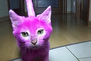Πέθανε γατάκι που το έβαψαν ροζ