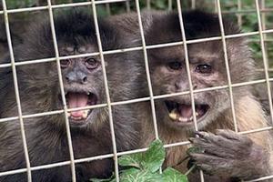 Όταν μια μαϊμού βγαίνει πρώτη φορά ραντεβού