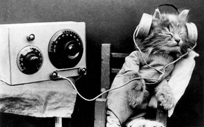 Κι όμως, υπάρχει μουσική για γάτες