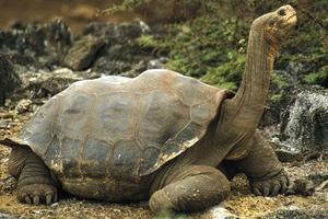 aa78b0f43539 Πόσα χρόνια ζουν τα ζώα – Newsbeast