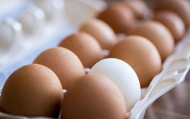 Εκατομμύρια μολυσμένα αβγά έχουν εισαχθεί στη Γερμανία
