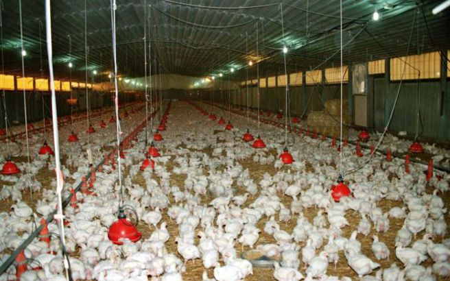 Συναγερμός για τη γρίπη των πτηνών που έφτασε στον Έβρο