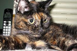 Η γηραιότερη γάτα στον κόσμο είναι 27 ετών