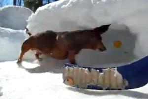 Χόκεϊ στο χιόνι