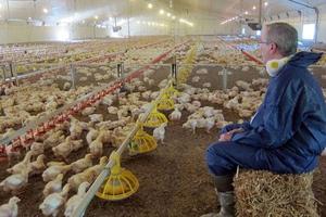 Στο εσωτερικό μιας φάρμας με κοτόπουλα των KFC