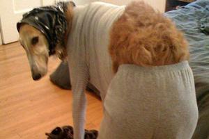 Σκύλοι και... πιτζάμες