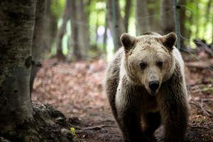 Αρκουδάκι ενός έτους βρέθηκε νεκρό κοντά στην Κοζάνη