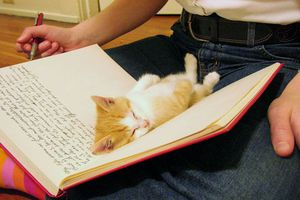 Στις γάτες δεν αρέσουν τα αφεντικά που διαβάζουν