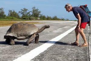 Να τι γίνεται όταν διακόπτει κανείς χελώνες την ώρα της ερωτικής πράξης