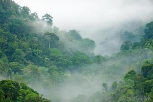 Υπάρχουν μόλις δυο δάση στη Γη άθικτα από τον άνθρωπο