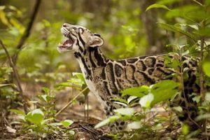 Χαρμόσυνη γέννηση στον ζωολογικό κήπο του Μαϊάμι
