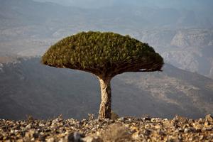 Θαυμαστά δέντρα με προσωπικότητα