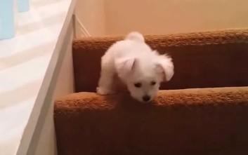 Κουτάβια μαθαίνουν να ανεβαίνουν σκαλιά