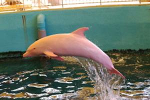 Το δελφίνι που… κοκκινίζει!