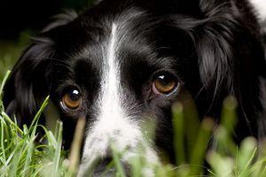 Γιατί οι σκύλοι κλέβουν τις καρδιές των ανθρώπων με το βλέμμα τους