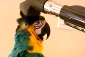 Ο παπαγάλος που λατρεύει την ηλεκτρική σκούπα