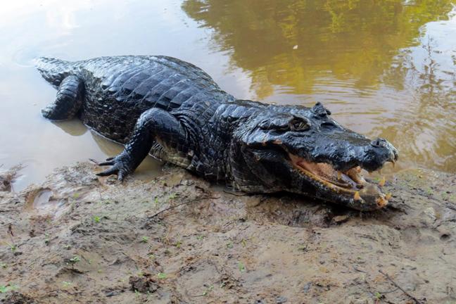 Δέκα τρομακτικά πλάσματα του Αμαζόνιου