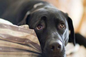 Οικογένεια είδε το σκυλί της σε δημοπρασία στο eBay για… τα χρέη της