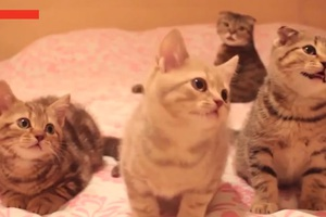 Εφτά λόγοι για να έχει κάποιος γάτα