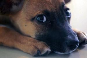 «Τα πρόστιμα κακοποίησης ζώων μειώνονται στο μισό»