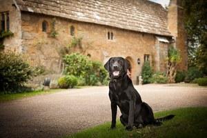Διακοπές στο Ηνωμένο Βασίλειο μαζί με το σκύλο