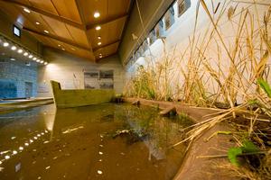 Η αλληλεξάρτηση ανθρώπου και φύσης σε ένα μουσείο