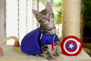 Αν οι Avengers ήταν γάτες