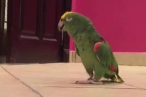 Ο παπαγάλος με το σατανικό γέλιο