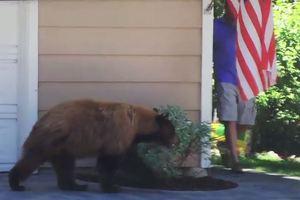 Αρκούδα και άντρας τρόμαξε ο ένας τον άλλο