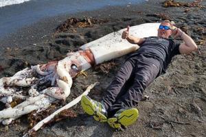 Η θάλασσα ξέβρασε ένα γιγάντιο καλαμάρι
