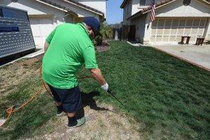 Οι Καλιφορνέζοι… βάφουν πράσινους τους ξερούς κήπους τους!