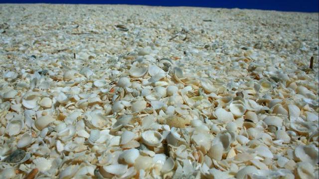 beach96c.jpg